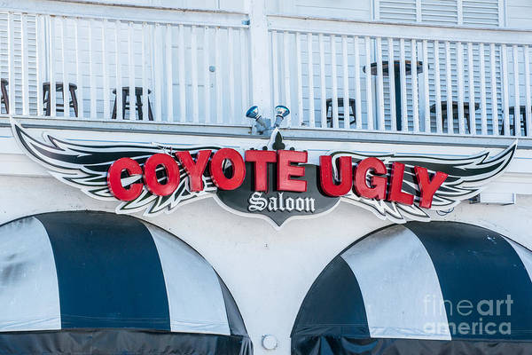Ugly Photograph - Coyote Ugly Key West  by Ian Monk