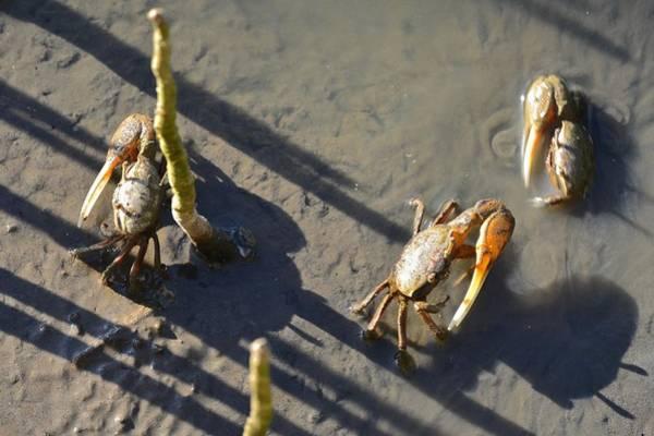 Photograph - Crab Babies by Ricardo J Ruiz de Porras