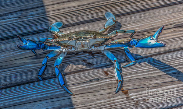 Photograph - Crab Legs by Dale Powell