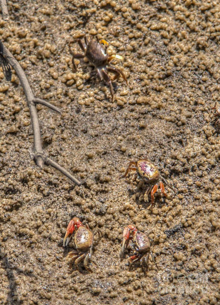 Photograph - Crab Party by Dale Powell