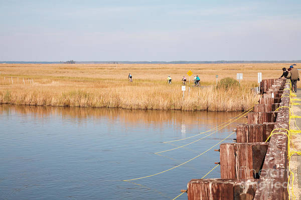 Photograph - Crabbers And Cyclists At Blackwater  National Wildlife Refuge Near Cambridge Maryland  by William Kuta