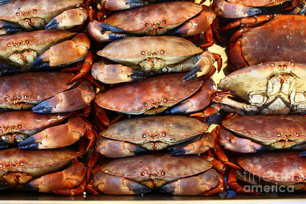 Photograph - Crabs Await Their Fate by James Brunker