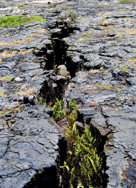 Photograph - Crack In The Lava by Christi Kraft