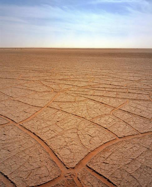 Sahara Photograph - Cracked Mud by David Parker/science Photo Library