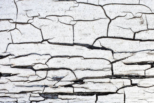 Rot Photograph - Cracked Wood Pattern by Tom Gowanlock