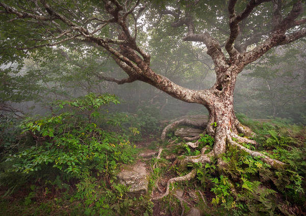 Appalachian Mountains Photograph - Craggy Gardens Blue Ridge Parkway Asheville Nc - Enduring Craggy by Dave Allen
