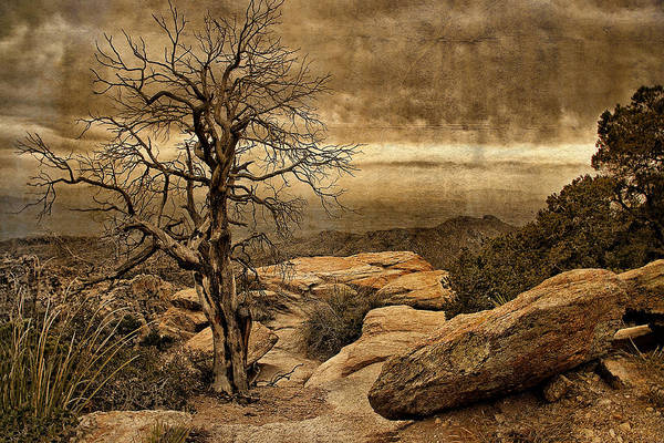 Photograph - Crags And Crooks I by Leda Robertson