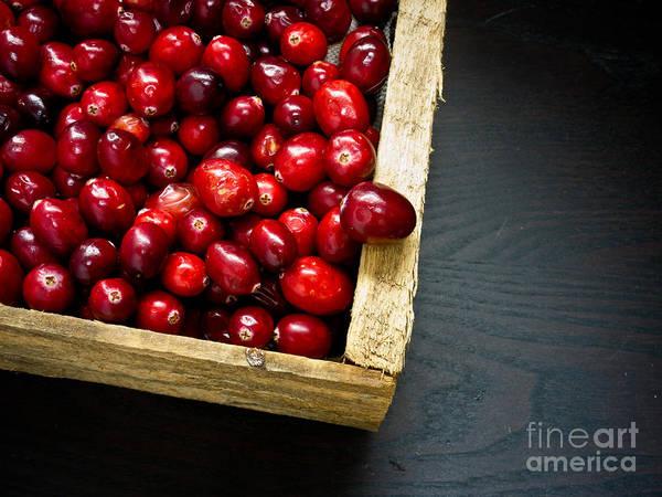 Photograph - Cranberries by Edward Fielding