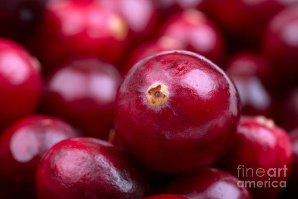 Glossy Photograph - Cranberry Closeup by Jane Rix
