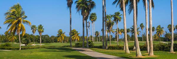 Photograph - Crandon Park Palms by Ed Gleichman