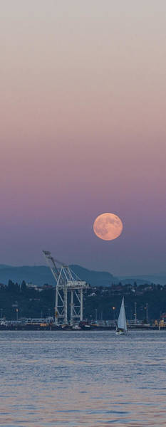 Photograph - Crane Moon Sail by Scott Campbell