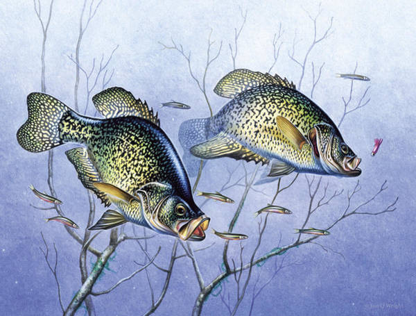 Wall Art - Painting - Crappie Brush Pile by JQ Licensing