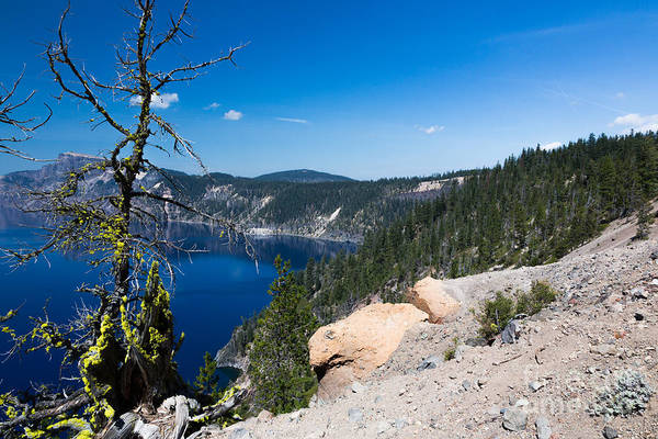 Crater Lake Np Photograph - Crater Lake And Moss Covered Tree by Dan Hartford