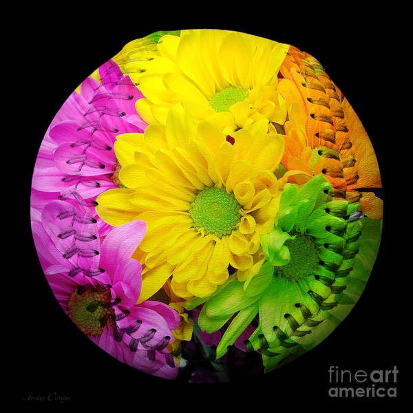 Photograph - Crazy Daisies Baseball Square by Andee Design