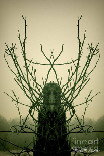 Photograph - Creature Of The Wood by David Gordon