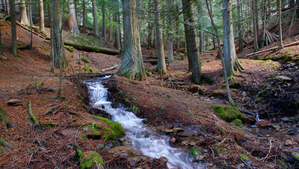 Photograph - Creek At Liberty Lake Cedar Grove by Ben Upham III