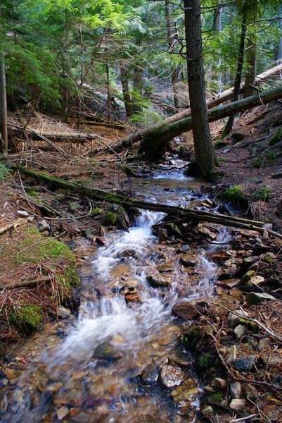 Photograph - Creek At The Cedar Grove by Ben Upham III