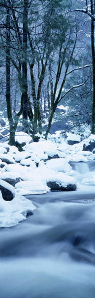 Wall Art - Photograph - Creek Flowing Through Forest In Winter by Panoramic Images