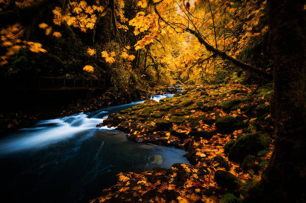 Photograph - Creek In Autumn by Brian Bonham