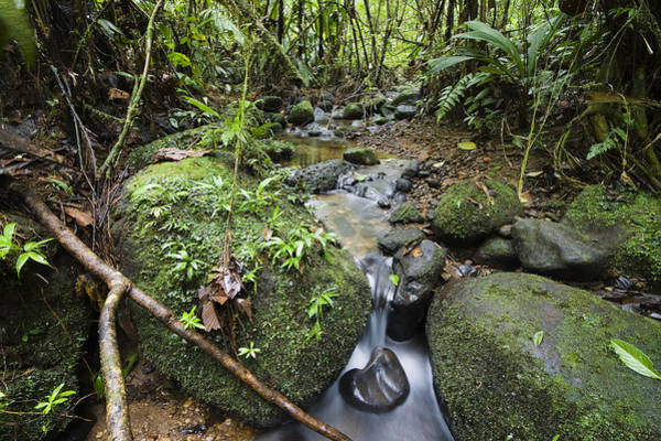 Carrillo Photograph - Creek In Mountain Rainforest Costa Rica by Konrad Wothe