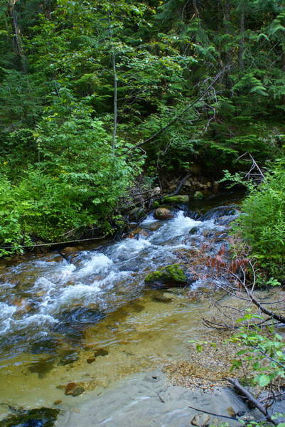 Photograph - Creek Scene From The Colville National Forest by Ben Upham III