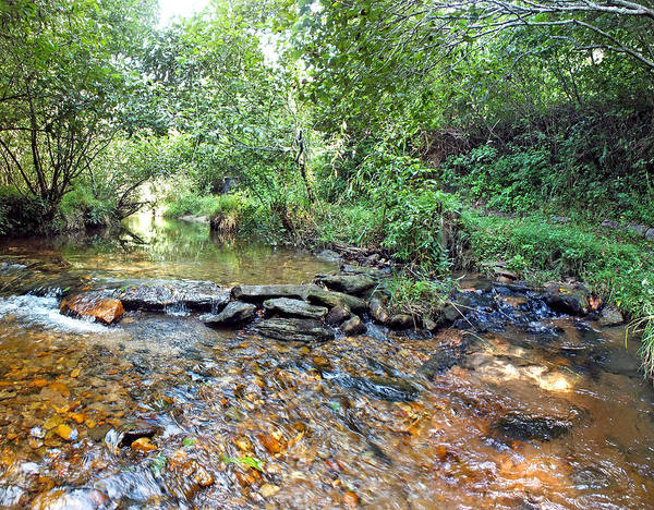 Photograph - Creekside 2 by Duane McCullough