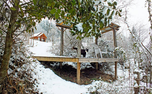 Photograph - Creekside Pavillion With Cat In The Snow by Duane McCullough