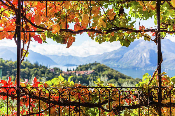 Chalet Photograph - Creeper In Autumn by Deimagine
