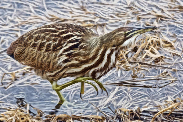 Photograph - Creepin Bittern by Wes and Dotty Weber