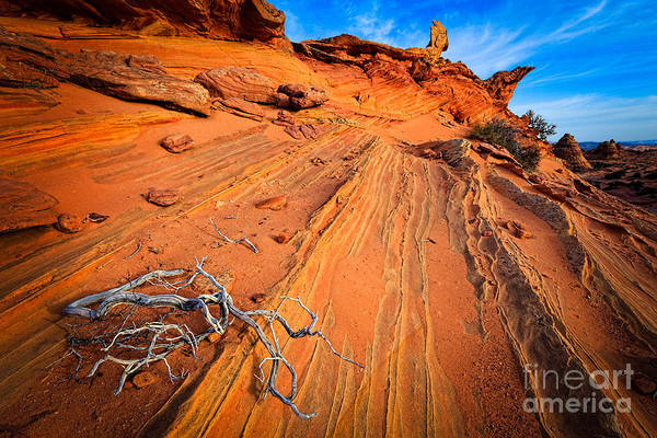 Vermilion Cliffs Wall Art - Photograph - Creeping Branches by Inge Johnsson