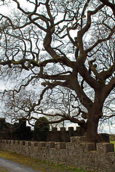 Photograph - Creepy Castle Tree by Jennifer Robin