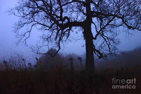 Photograph - Creepy Tree by Jacqueline Athmann
