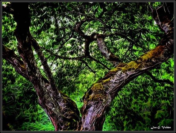Painting - Creepy Tree by Jon Volden
