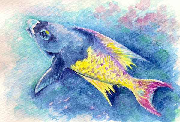 Painting - Creole Wrasse by Ashley Kujan