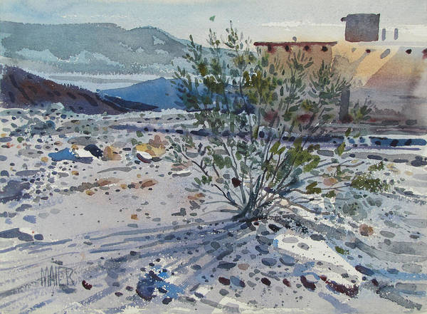Adobe Wall Art - Painting - Creosote Bush by Donald Maier