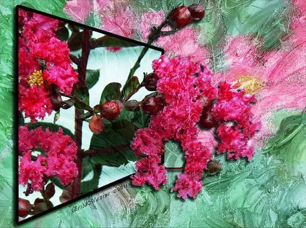 Photograph - Crepe Myrtle In Pastel Oils by Ericamaxine Price