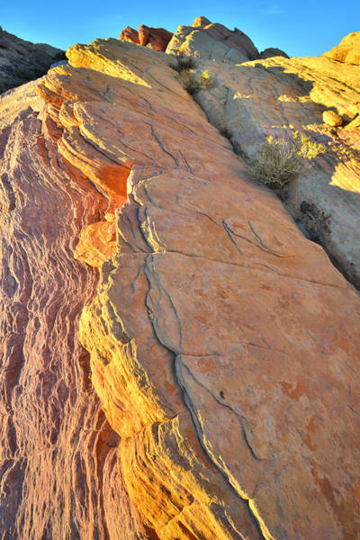 Photograph - Crest Of Color - Valley Of Fire by Ray Mathis