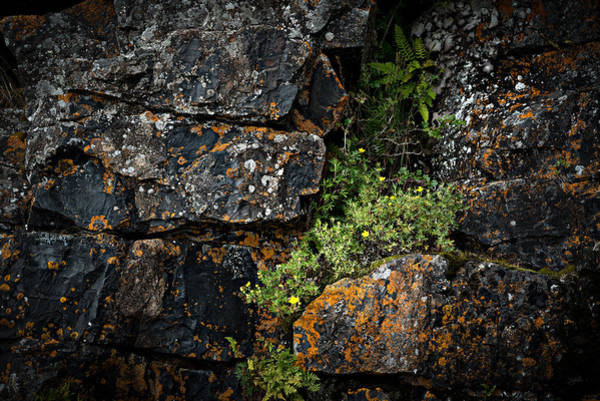 Art Print featuring the photograph Crevice  by Doug Gibbons