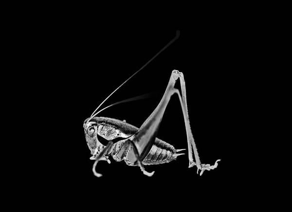 Silvery Photograph - Cricket by Yacine M'seffar/science Photo Library