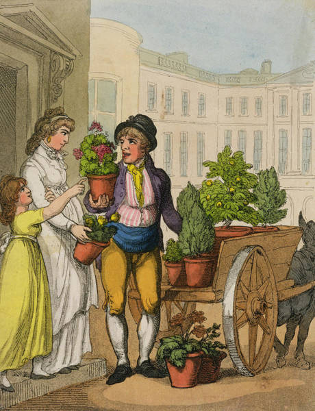 Cart Drawing - Cries Of London The Garden Pot Seller by Thomas Rowlandson
