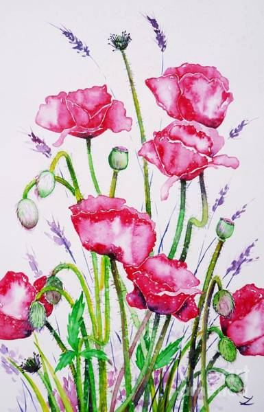 Painting - Crimson Poppies by Zaira Dzhaubaeva