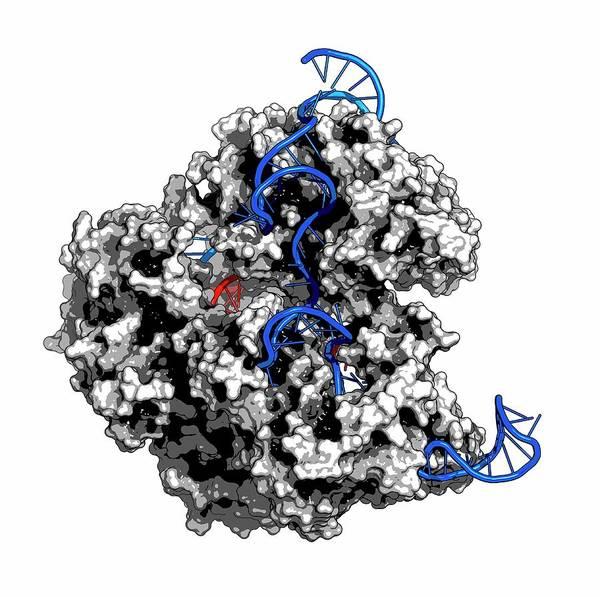 Gene Photograph - Crispr-cas9 Gene Editing Complex by Molekuul