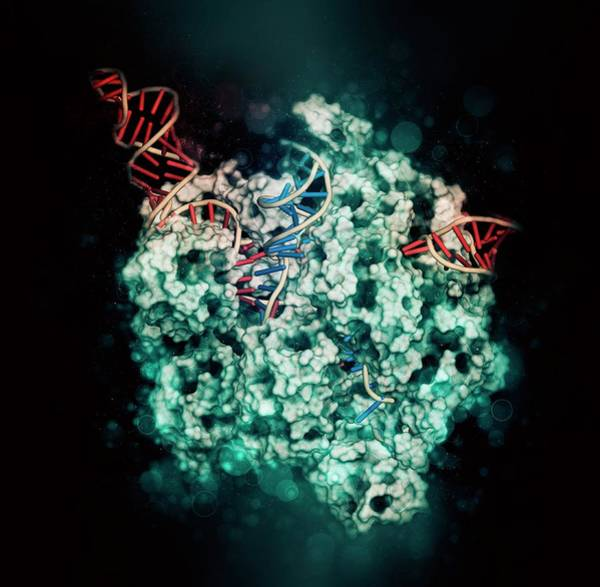 Wall Art - Photograph - Crispr-cas9 Gene Editing by Molekuul/science Photo Library
