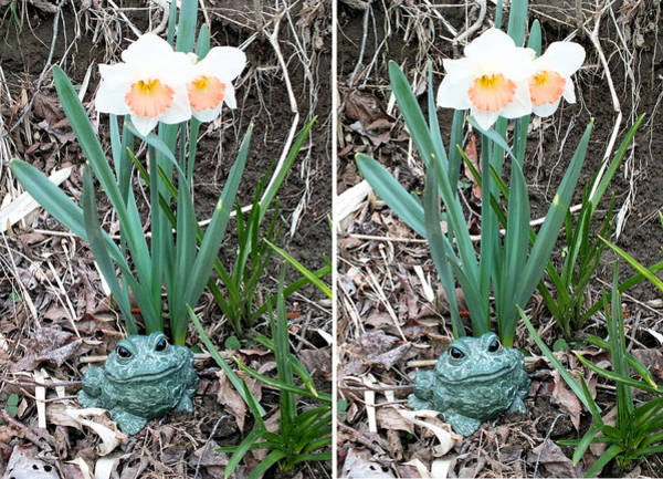 Photograph - Croaky -- Guardian Of The Daffodils In Stereo by Duane McCullough