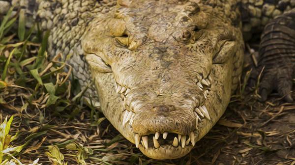 Alligators Wall Art - Photograph - Crocodile by Aged Pixel