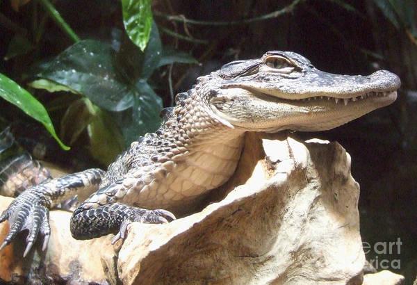 Photograph - Crocodile by Andrea Anderegg