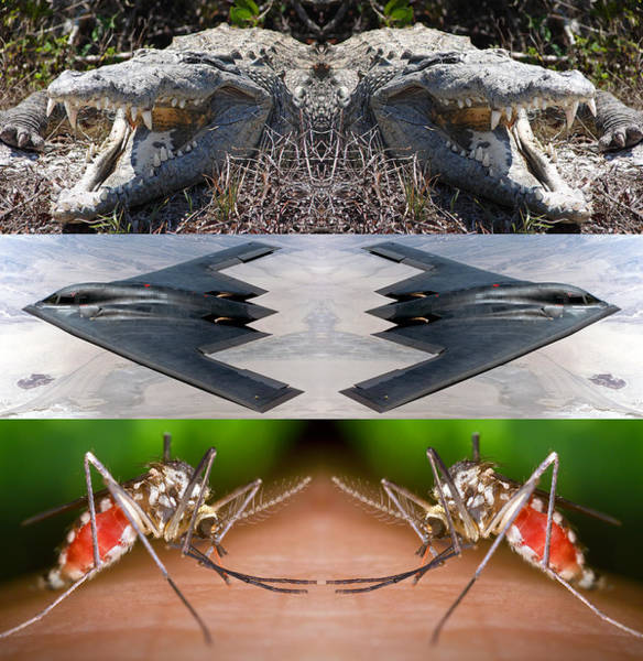 Photograph - Crocodile Bomber Biter 2014 by James Warren