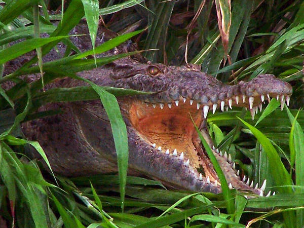 Photograph - Crocodile Hunter by Jennifer Robin