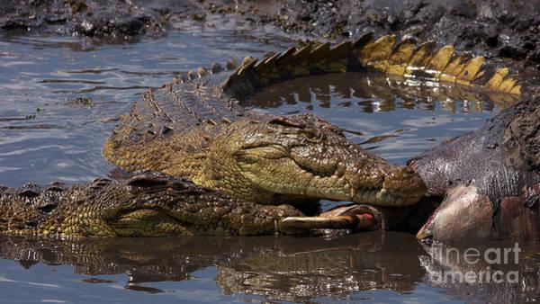 Photograph - Crocs Eating Elephant by Mareko Marciniak