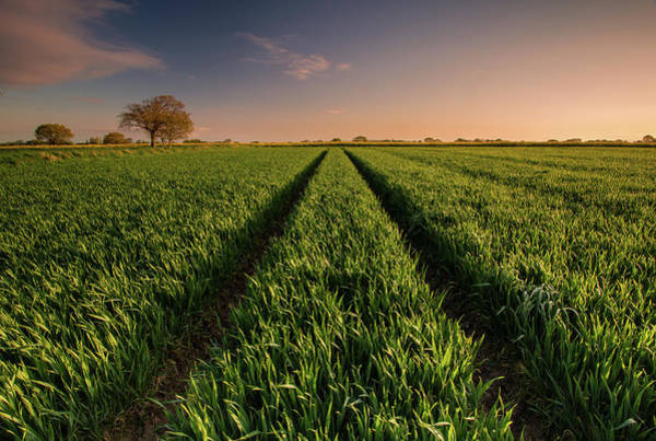 Greater Manchester Wall Art - Photograph - Crop Field At Sunrise by U.knakis Photography